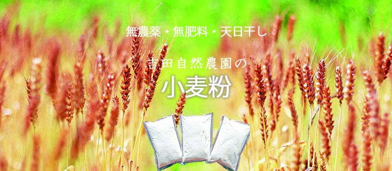 無農薬無肥料のハーブティー「干し柚子」
